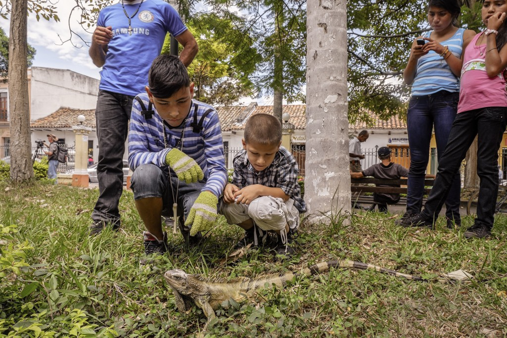Children observe a wild iguana in Buga, Colombia's Parque Cabal.