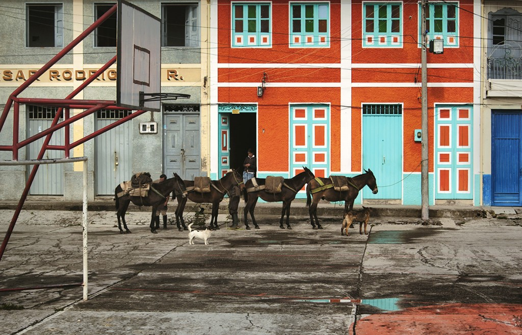 Dogs keep a mule train in line as a farmer shops at the general store in Murillo, Colombia.