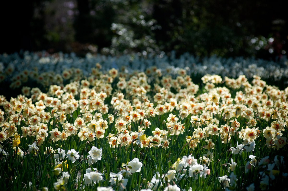 Memphis Botanic Garden A WorldClass Attraction Smart City Memphis